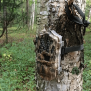Best Hunting Trail Game Cameras on the Market